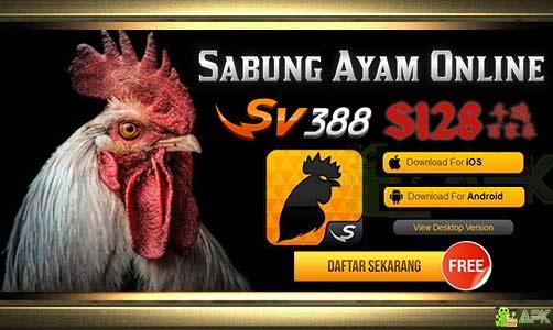 Daftar Judi S128 & SV388 » Agen Sabung Ayam Terpercaya Indonesia