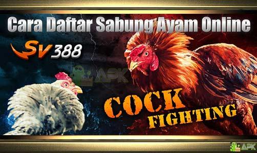 Daftar SV388 » Agen Sabung Ayam Online » Deposit Termurah